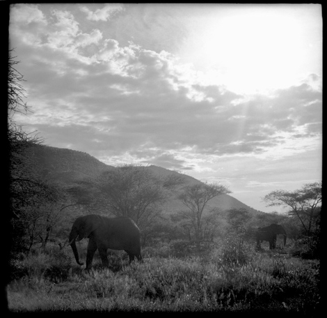 Serengeti_elephants_02